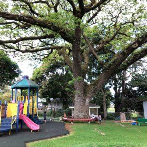 ハワイ・ホノルルの保育園給食を体験